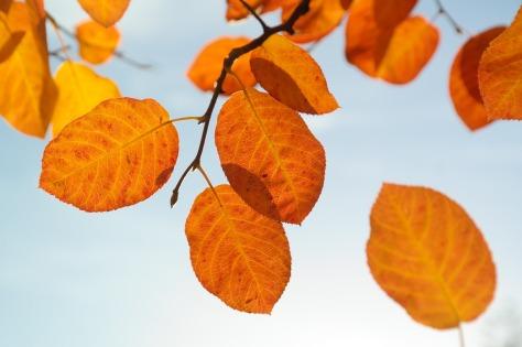 leaves-228111_1280